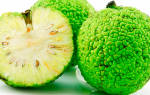 Адамово яблоко или маклюра лечебные свойства