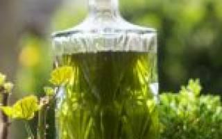 Крапива лечебные свойства настойка
