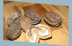 Амурский орех лечебные свойства