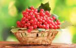 Калина ягода лечебные свойства рецепты