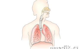 Крапива лечебные свойства при кашле