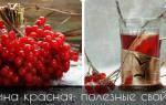 Плоды калины красной лечебные свойства