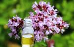 Душица эфирное масло лечебные свойства и противопоказания