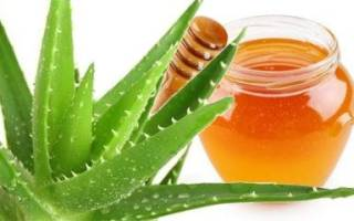 Алоэ вера с медом лечебные свойства и противопоказания