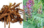Сироп корня солодки лечебные свойства и противопоказания