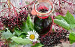 Бузина черная лечебные свойства и противопоказания рецепты