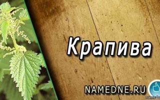 Крапива лечебные свойства от псориаза