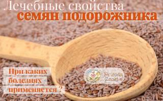 Семена подорожника овального лечебные свойства и противопоказания