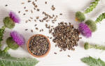Семена расторопши пятнистой лечебные свойства