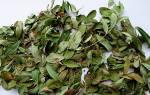 Брусника обыкновенная листья лечебные свойства и противопоказания