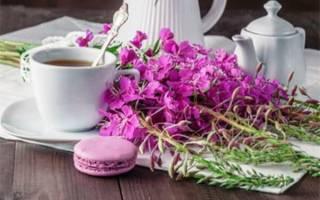 Иван чай лечебные свойства для детей