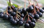 Какими лечебными свойствами обладает черноплодная рябина?